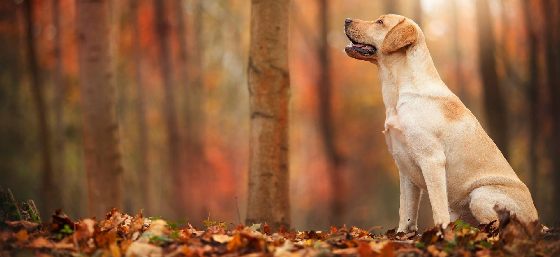 Dog-watching-the-leaf (1)