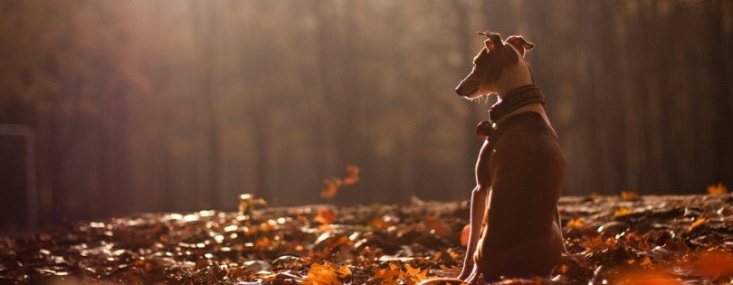 dog_autumn_nature_leaves_forest_73197_3840x2160-e1442576298799-810x395kopie