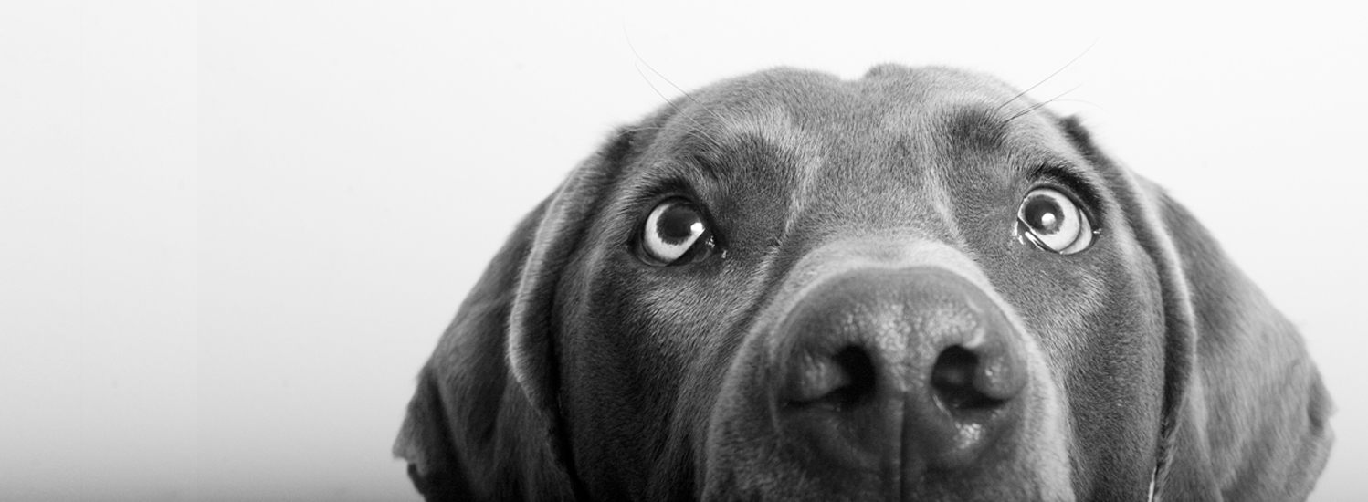 Dog-home-page-banner