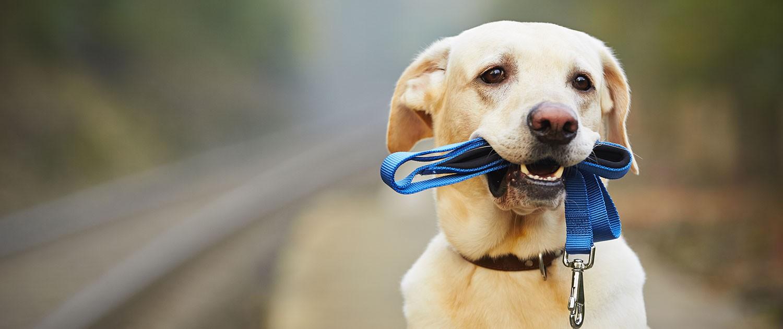 ocweb-summerrec-dogobedience-slide-1-1500x630